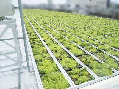 義務緑化だけでなく店内の冷房負荷の低減にも一役買っています。
