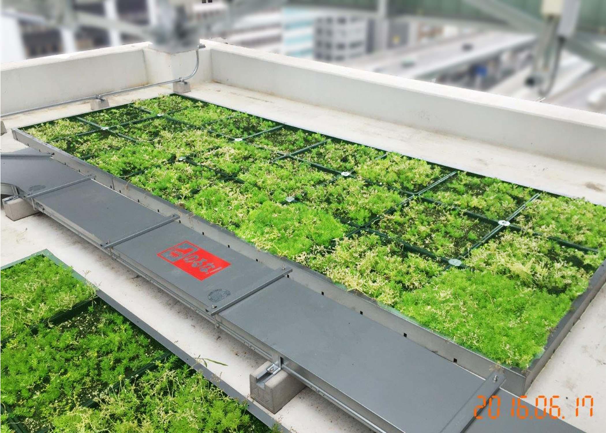 屋上緑化を行うことでヒートアイランド現象を緩和するなどの地球環境保護に貢献しています。