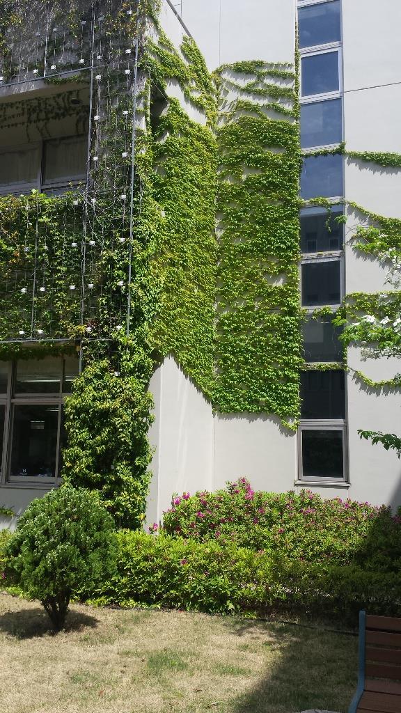 つる性植物が順調に生育し壁を覆っています