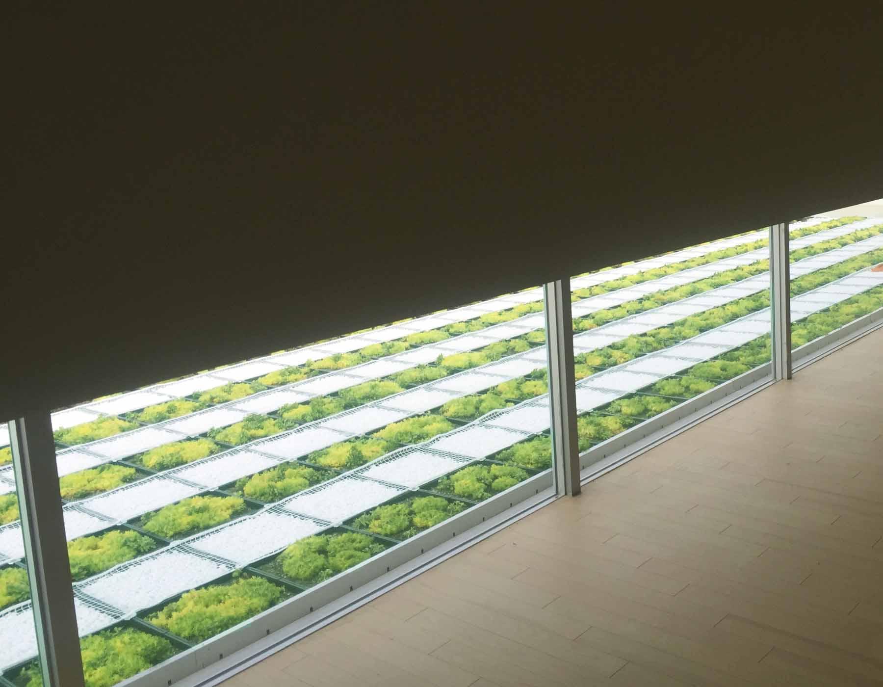 建物室内から小窓は足元に位置します。フローリングの木目が屋上緑化を際立たせてくれます